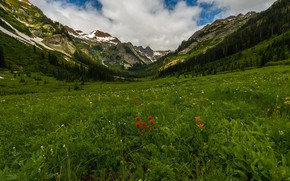 Картинка зелень, пейзаж, цветы, горы, природа, красота, луг