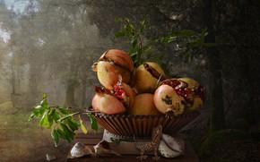 Картинка деревья, ветки, природа, фон, еда, ящерица, ракушки, фрукты, натюрморт, предметы, гранаты, подставка, зёрна, композиция, вазочка