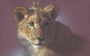 Картинка портрет, живопись, львёнок, рисунок цветными карандашами