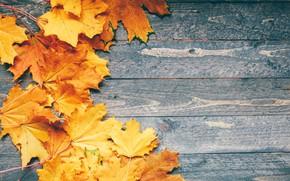 Картинка осень, листья, фон, colorful, клен, yellow, wood, autumn, leaves, maple