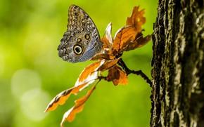 Картинка листья, дерево, бабочка, ветка, боке