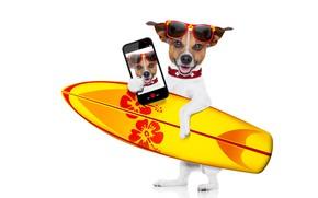 Картинка фото, фотошоп, юмор, очки, белый фон, серфинг, доска, смартфон, селфи, Джек-рассел-терьер