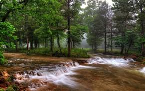 Картинка лес, деревья, природа, туман, река, Миссури, США