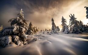 Картинка зима, снег, деревья, пейзаж, природа, утро, ёлочки, Robert Didierjean