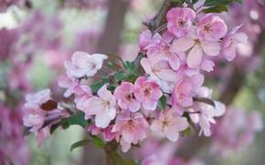 Картинка ветки, дерево, цветение