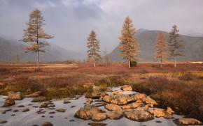 Картинка осень, небо, деревья, горы, туман, камни, холмы, берег, утро, ели, дымка, Россия, ёлки, водоем, сухая …