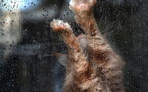 Картинка кошка, кот, стекло, капли, поза, дождь, лапы, окно, рыжий