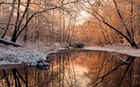 Картинка зима, вода, снег, деревья, река, Aleksandr Razgulyaev