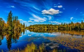 Обои осень, лес, небо, озеро, отражение, Норвегия, Lønnsjøen