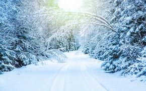 Картинка зима, дорога, снег, деревья, ветки, колея, white, snow, tree, ветки в снегу