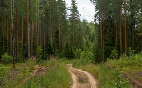 Картинка дорога, лес, дето
