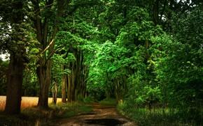 Картинка дорога, деревья, пейзаж, природа, красота
