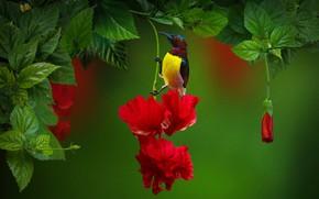 Картинка листья, ветки, природа, тропики, птица, цветки