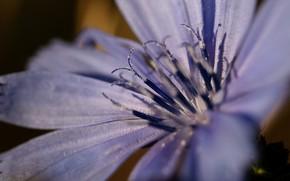 Картинка цветок, макро, тычинки