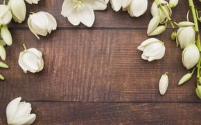 Картинка цветы, лепестки, white, белые, wood, flowers, petals