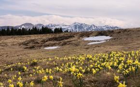 Картинка цветы, горы, весна