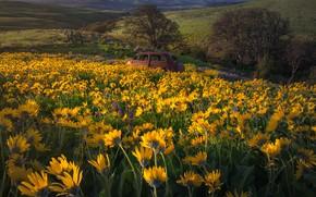 Картинка машина, цветы, луг, Бальзамориза, Washington State, Columbia Hills State Park, Штат Вашингтон, Парк штата Колумбия …