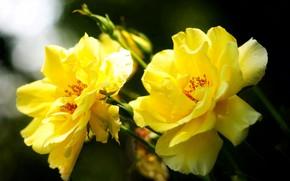 Картинка цветок, цветы, желтый, природа, тепло, настроение, красота, весна, желтые цветы