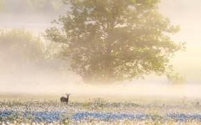 Картинка поле, лето, туман, олень, утро