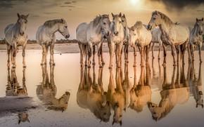 Картинка вода, природа, кони
