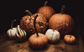 Картинка темный фон, стол, доски, урожай, тыквы, разные