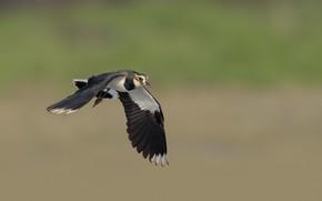 Картинка природа, фон, птица, летит, DUELL ©
