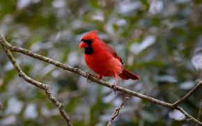 Картинка птица, листва, ветка, окрас, Backyard Blues About Over