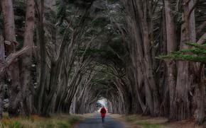 Картинка человек, деревья, дорога