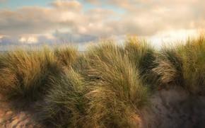Картинка песок, трава, заросли, берег, водоем, кочки