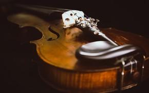 Картинка макро, музыка, скрипка