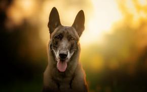 Обои фон, друг, собака