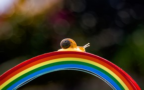 Картинка макро, свет, полоски, мост, полосы, темный фон, улитка, радуга, дуга, ракушка, мостик, цвета радуги, разноцветный, ...