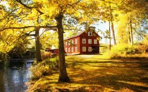 Картинка осень, деревья, дом, парк, листва, золотая осень