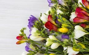 Картинка цветы, фон, букет