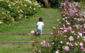 Картинка парк, розы, девочка