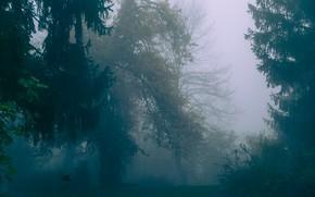 Картинка лес, деревья, природа, туман, Италия