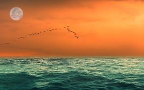 Картинка море, небо, птицы, луна