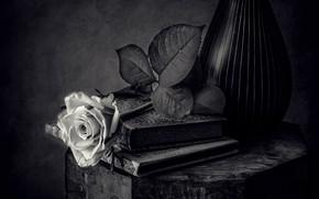 Картинка черно-белый, роза, книги