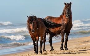 Картинка песок, море, волны, пляж, свет, природа, берег, кони, лошади, пара, прибой, два, челка, голубое небо, …