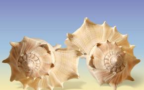 Картинка closeups, Seashells, decoracion