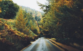 Картинка дорога, осень, лес, фото, Daniel Casson