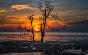 Картинка закат, дерево, берег, силуэт, водоем
