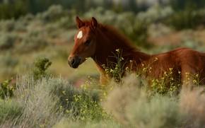 Картинка трава, морда, конь, лошадь, жеребенок