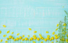 Картинка цветы, фон, дерево, голубой, доски, желтые, лепестки, yellow, wood, blue, flowers, petals