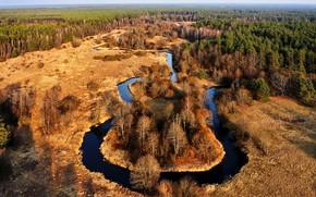 Картинка Lietuva, miškas, upė