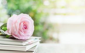 Картинка роза, книги, бутон