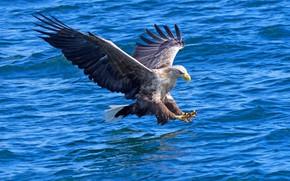 Картинка вода, охотник, хищная птица
