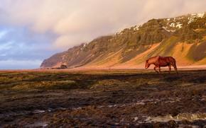 Картинка поле, горы, конь, лошадь, Исландия