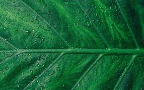 Картинка вода, лист, увпли