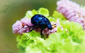 Картинка лето, капли, макро, цветы, синий, фон, жук, размытие, насекомое